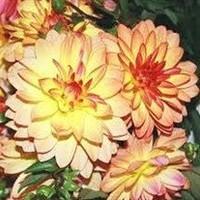 Dora Gertrude Jones nee Simmons  November 6 1918  October 9 2018 avis de deces  NecroCanada