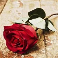 Phyllis Ruby Creighton  March 14 1932  November 13 2018 avis de deces  NecroCanada