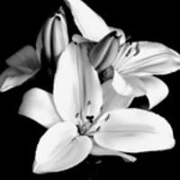 Denise Groulx  9 nov. 1956  2 déc. 2018 avis de deces  NecroCanada