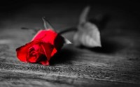 Frederick Fred Alphonsis Markee  2018 avis de deces  NecroCanada