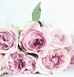 Maria Damaren  2019 avis de deces  NecroCanada