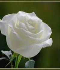 Corinne Cotton  28 décembre 1933 – 19 janvier 2019