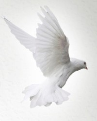 Rose Ann Johnson Puchailo  May 22 1951  May 5 2019 (age 67) avis de deces  NecroCanada