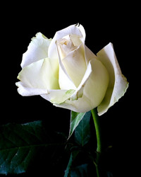 Irene Callihoo  February 24 1925  May 22 2019 (age 94) avis de deces  NecroCanada