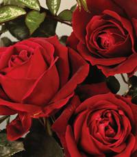 Marjorie C Rose  Friday June 7th 2019 avis de deces  NecroCanada