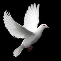 Jose Da Cunha avis de deces  NecroCanada
