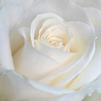 Gingras Lyse  17 octobre 2019 avis de deces  NecroCanada