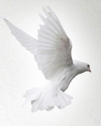 LaBelle Janet Coward Dixon  November 29 2019 avis de deces  NecroCanada