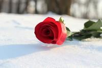 Shauna Lee McCarthy  May 12 1972  January 15 2020 (age 47) avis de deces  NecroCanada