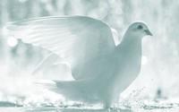 Candlelight Memorial Service  2020 avis de deces  NecroCanada