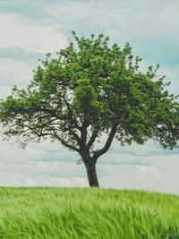 Ceremonie arbre de vie 2019 - avis de deces  NecroCanada