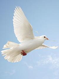 Wing Ko