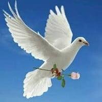 Potvin Carol  11 juin 2021 avis de deces  NecroCanada