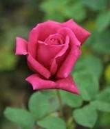 REMPEL Winona  Died: Saturday  23 December 2017