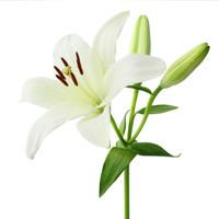 Vivian Joyce Nickerson  March 02 1937  June 19 2018 avis de deces  NecroCanada