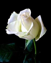 Shirley May Price Saville  May 1 1934  October 17 2018 (age 84) avis de deces  NecroCanada