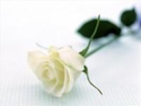 PLANTE Therese  1931  2018 avis de deces  NecroCanada