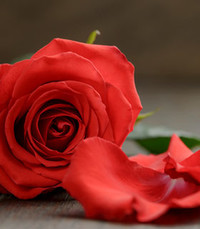 Mary Rose Barey  Friday December 4th 2020 avis de deces  NecroCanada