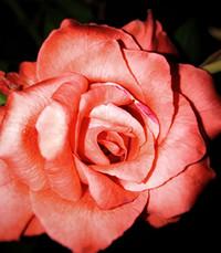 Lana Joyce Rogers Rice  Monday June 7th 2021 avis de deces  NecroCanada